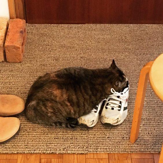 ウチの猫は仕事のデキル人を嗅ぎ分ける