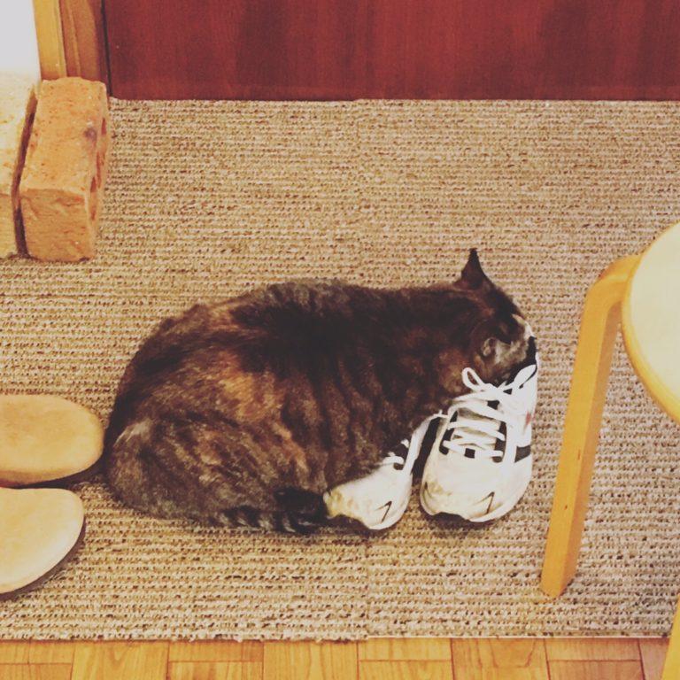 ねこ 靴のにおいが好き