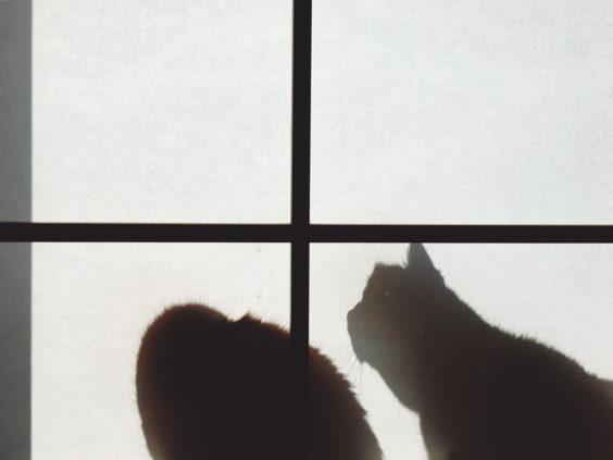 猫背だね。 お互いね。