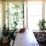 7月の猫の日