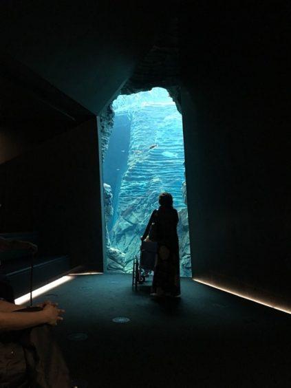 うみがたり大水槽。海の中の洞窟のよう