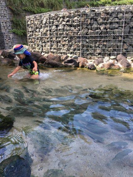 うみがたりタッチプールで魚を追いかける子ども