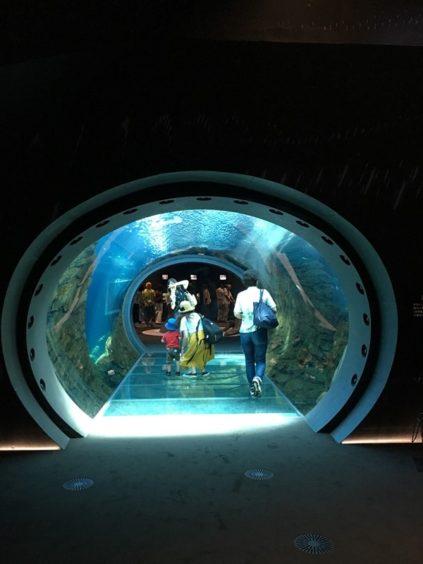 うみがたり大水槽のトンネル