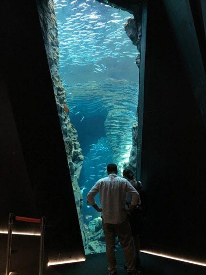 上越市立水族博物館うみがたり、床から天井までのガラス