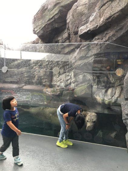 加茂水族館、ゾウアザラシ