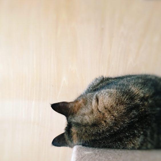 2019年1月猫の日