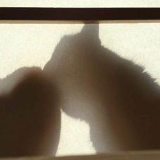窓辺で片方の猫を毛づくろい