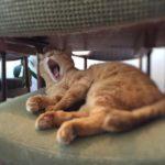 令和元年5月初猫の日