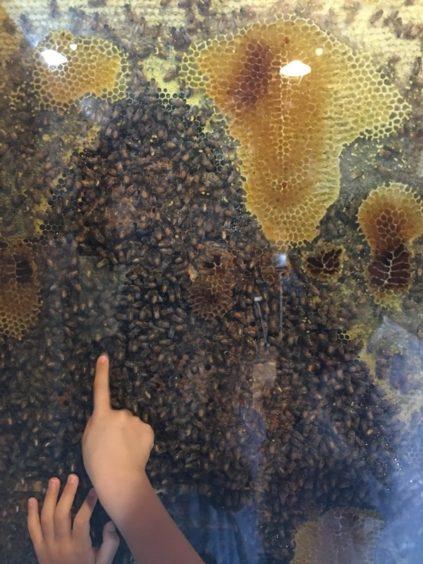 工房のハチの巣観察箱