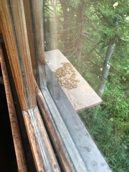 外とつながっている蜂の観察箱