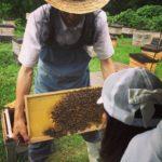 蜂の巣箱 観察体験