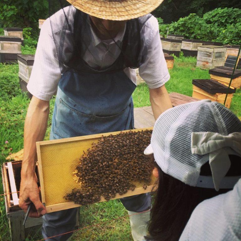 ハチの巣箱から取り出したハチの巣を間近で観察