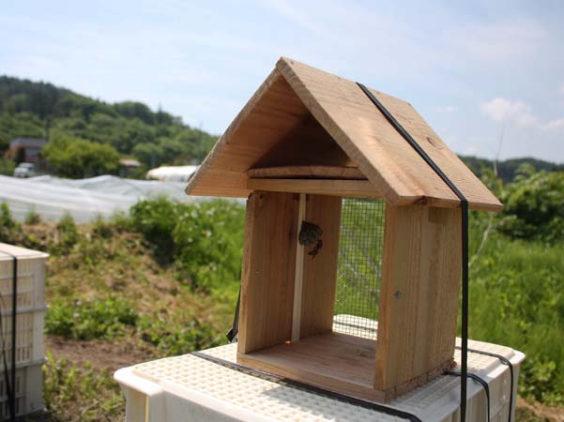 アシナガバチが移住した巣箱