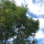 建物の角に植える木