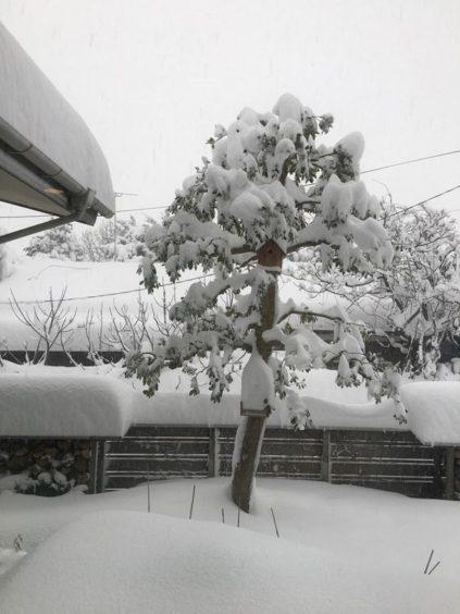 20210109まちなか山荘 庭積雪